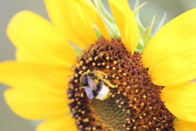 CREApaysage éco-responsable pour la gestion raisonnée des jardins
